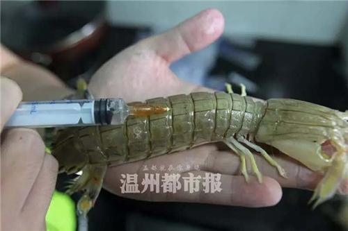 虾蛄被注射明胶?专家:那是虾蛄的性腺!