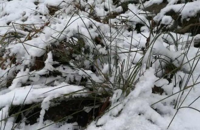 黑龙江迎来今秋首场降雪